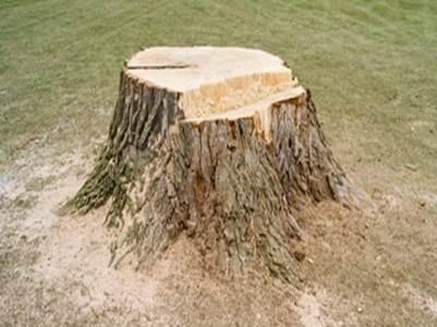 Baumstumpf Und Baumwurzeln Entfernen So Gelingt S